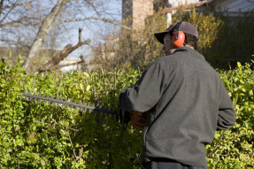 Busch'le hilft Gartenarbeiten Bezgenriet